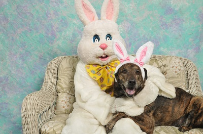 Fleshman Photography Easter Bunny and Dog-2018